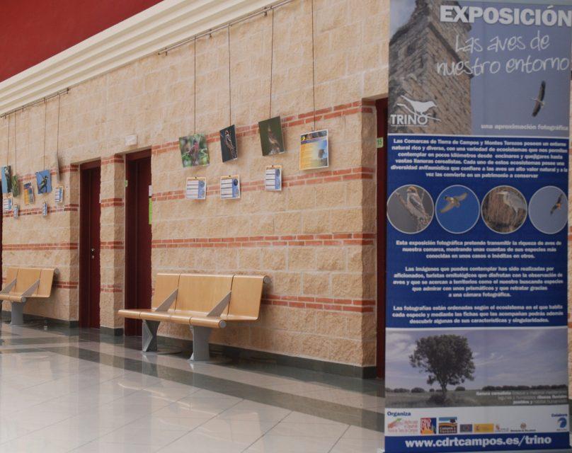 """Exposición fotográfica """"AVES DE NUESTRO ENTORNO"""""""